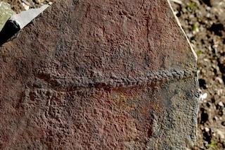 Ecco le più antiche tracce lasciate da un animale mai scoperte: hanno 550 milioni di anni