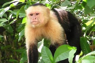 Le scimmie sanno prendere decisioni più intelligenti di noi: siamo ingabbiati nelle regole