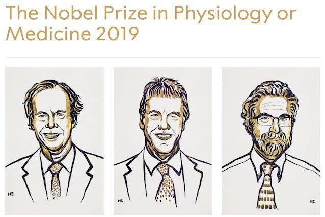 Premio Nobel per la Medicina all'uso dell'ossigeno nelle cellule