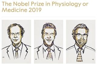 Nobel per la medicina, vincono Kaelin, Ratcliffe e Semenza: l'ossigeno per la lotta contro il cancro