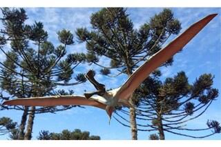"""Nuova specie di pterosauro scoperta in Australia: il """"drago di ferro"""" aveva ali di 4 metri"""