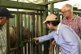 Addio a Iman, l'ultimo rinoceronte di Sumatra in Malesia: la specie è praticamente estinta