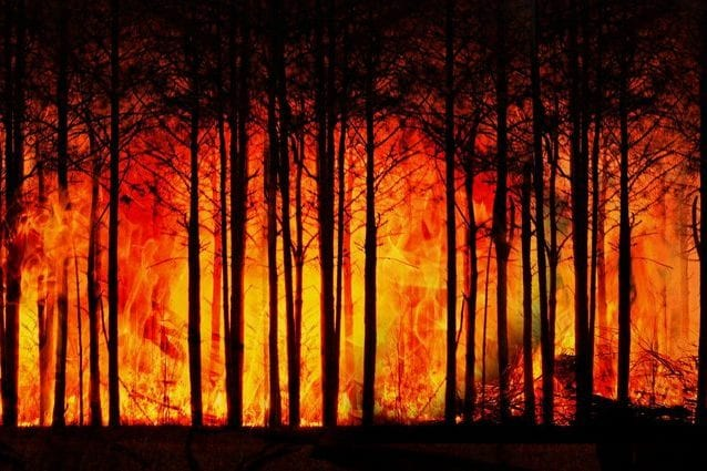 Una foresta in fiamme. Credit: geralt