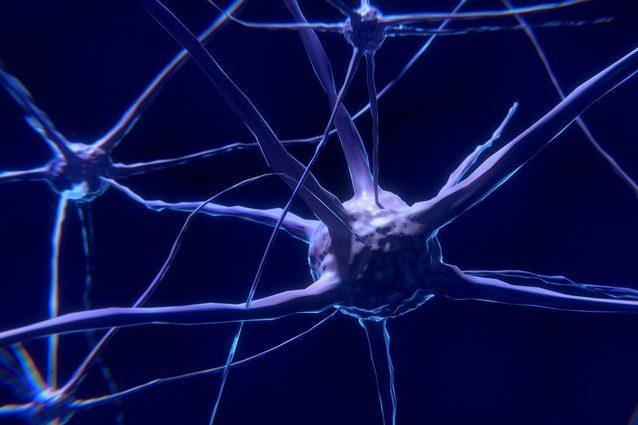 Neuroni. Credit: ColiNOOB