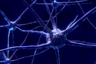 Creati i primi neuroni artificiali: chip bionici per combattere malattie cardiache e Alzheimer