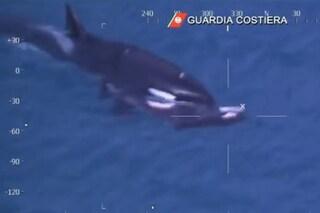 Orche a Genova, dopo la morte del piccolo si teme per le altre. Le ultime novità