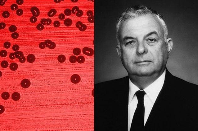 A sinistra, il batterio Haemophilus influenzae, a destra John Bennett Robbins. Credit: CDC