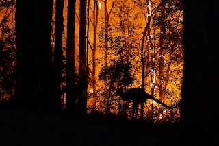 Australia, cosa c'entrano gli incendi con il riscaldamento globale (e i piromani)
