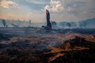 La Foresta Amazzonica è vicina al punto di non ritorno: rischia di trasformarsi in savana