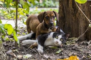 Coronavirus, cani e gatti non si ammalano e non lo trasmettono