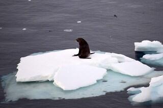 """Antartico più caldo della Spagna, scienziati preoccupati: """"Mai visto niente del genere"""""""