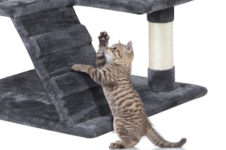 Migliori tiragraffi per gatti del 2020