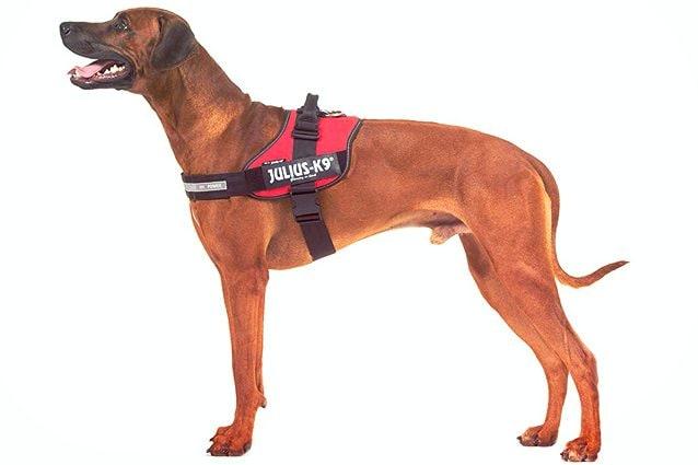 migliori pettorine per cani