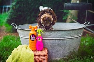 I migliori shampoo per cani del 2020