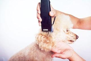 Migliori tosatrici per cani del 2020