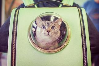 Migiori trasportini per gatti del 2020