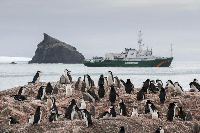 Colonia di pigoscelidi antartici. Credit: Greenpeace