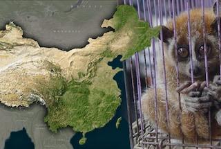 Perché i virus nascono in Cina