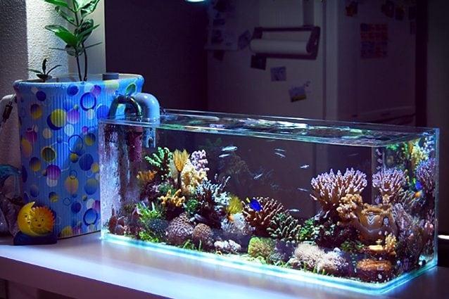 miglior filtro per acquario