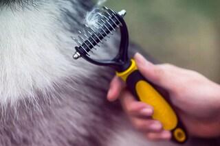 Migliori spazzole per cani del 2020