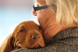 """C'è una nuova formula per calcolare l'età """"umana"""" dei cani: smentito il rapporto 1:7"""
