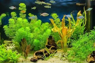 Come allestire un acquario di acqua dolce in 6 step