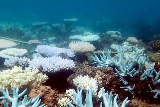 Drammatico sbiancamento sulla Grande Barriera Corallina a causa del riscaldamento globale