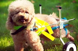 Migliori carrellini per cani con disabilità: guida all'acquisto