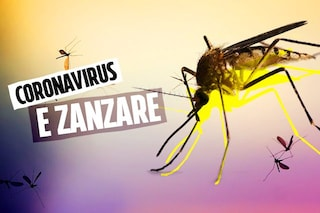 Le punture delle zanzare non trasmettono il coronavirus