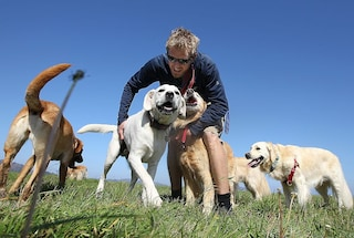 """Cani che fiutano il coronavirus: """"Piedi di piombo, capiamo se c'è rischio d'infezione"""""""