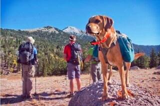 Equipaggiamento da trekking per cani: l'elenco dell'attrezzatura da comprare