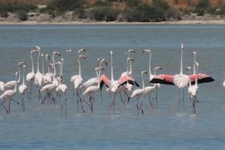 """Migliaia di fenicotteri invadono una laguna in Albania: l'uomo """"sparito"""" per il coronavirus"""