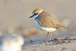 Sanificare le spiagge è inutile e dannoso: il WWF lancia l'allarme sul rischio ambientale