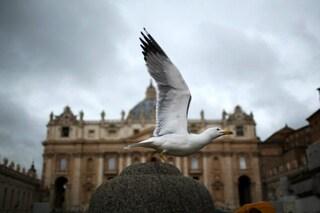 Gabbiani di Roma affamati dal coronavirus: cacciano piccioni, merli e topi per i pochi rifiuti