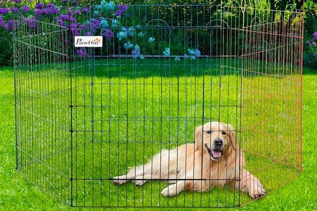 migliore box per cani