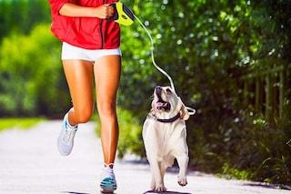 Migliori guinzagli per cani: classifica e consigli