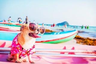 6 accessori estivi per cani in vista dell'estate