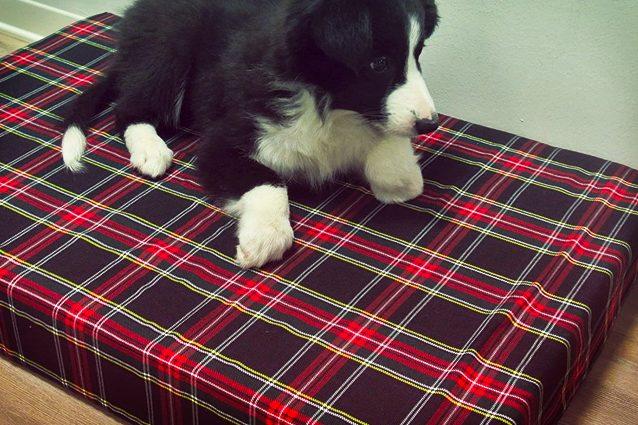 migliori cuscini per cani