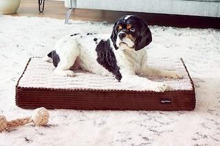 I migliori cuscini per cani