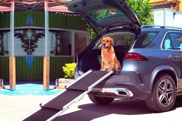 migliori rampe per cani