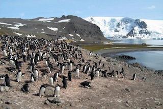 Le microplastiche sono entrate (anche) nella catena alimentare dell'Antartide: le prime prove