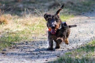I cani si orientano sfruttando il campo magnetico terrestre? Lo suggerisce uno studio