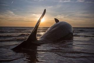 Cosa devi fare se trovi un animale marino in difficoltà