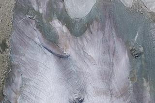 Perché alcuni ghiacciai delle Alpi si stanno tingendo di rosa: scienziati preoccupati