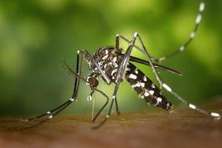 Rimedi anti zanzare, tra miti e verità: ecco quali funzionano veramente