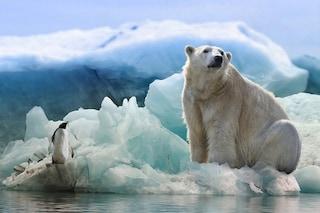 Artico senza ghiaccio marino estivo già nel 2035, secondo una nuova drammatica stima