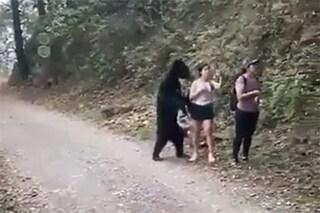 """Perché i veterinari hanno catturato e castrato l'orso nero diventato """"virale"""" per un selfie"""