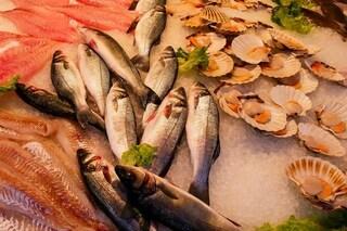 Studio rileva microplastiche in ogni prodotto ittico testato: ne mangiamo un piatto intero all'anno