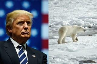 Trump spalanca le porte alle trivellazioni nell'incontaminato Rifugio Artico dell'Alaska