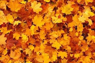 Arrivederci estate: cos'è l'equinozio d'autunno e perché quest'anno non cade il 21 settembre
